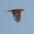 Male in flight.